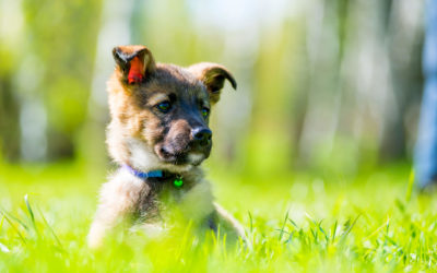 Estate planning for your furry best friend